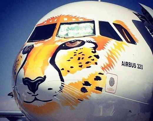 Le guépard d'Asie sur un des Airbus A320 de Meraj Airlines